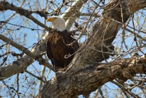 MRS Eagle